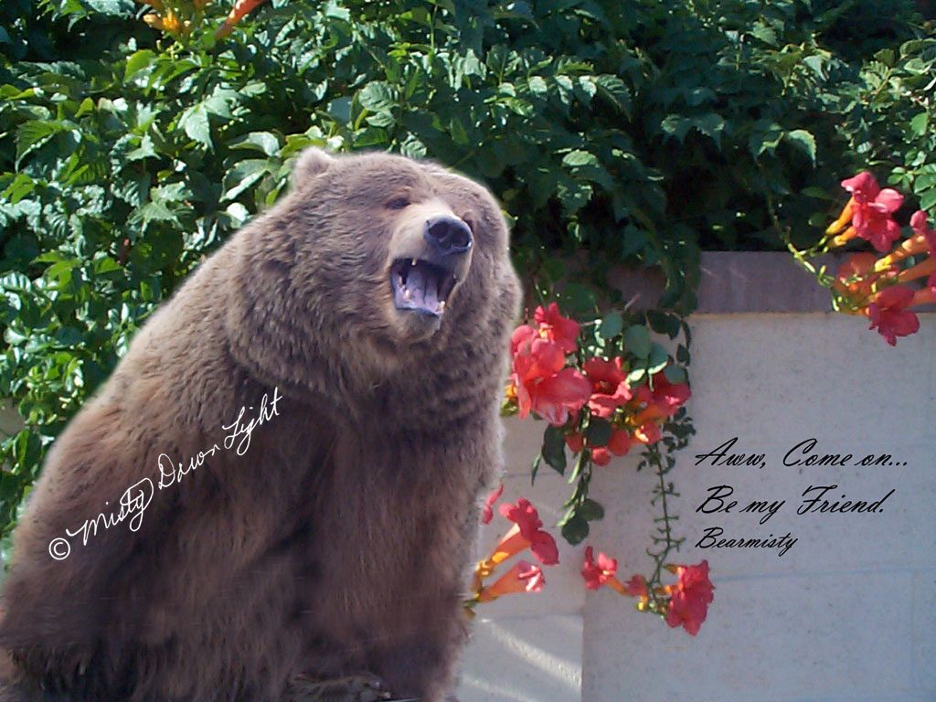 Bear asking be my friend
